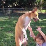 VIDEO: Perro cae encima de niña mientras jugaban con burbujas