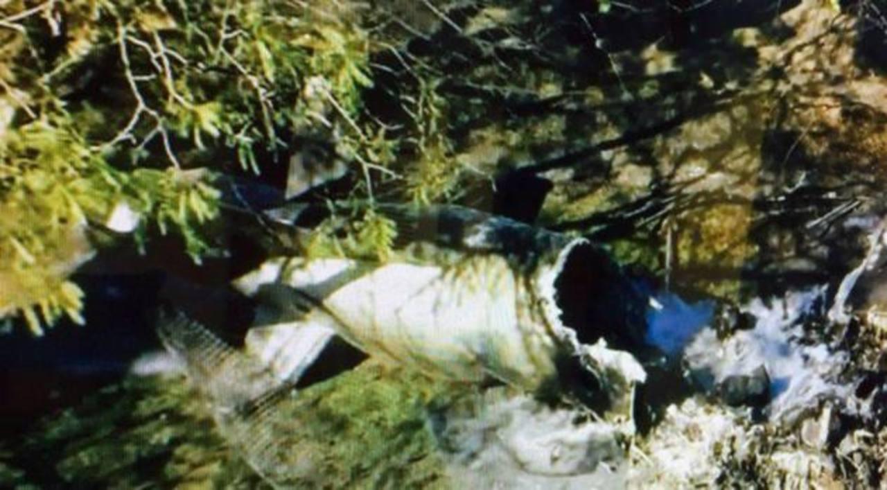 Avioneta se estrella en condado de Miami-Dade y mueren sus 4 ocupantes