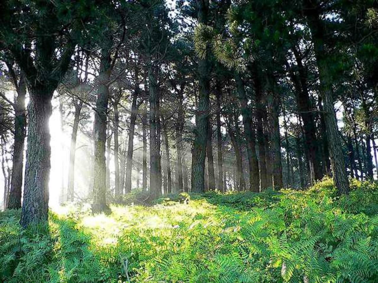 Hay árboles ideales para proteger mantos acuíferos