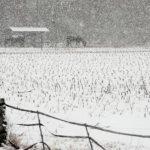 Caballos son vistos en un campo nevado durante una tormenta en Fayetville, Carolina del Norte, Estados Unidos.