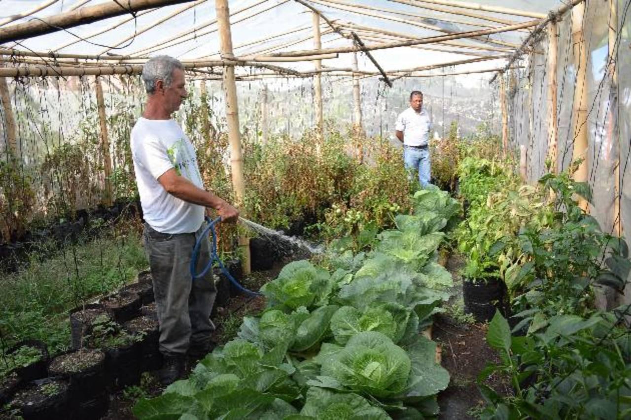 La iniciativa busca aliviar las condiciones sociales de los ahuachapanecos. foto edh / CRISTIAN DÍAZ Los habitantes ya cultivan sus propia comida y han logrado ahorrar con la canasta básica.