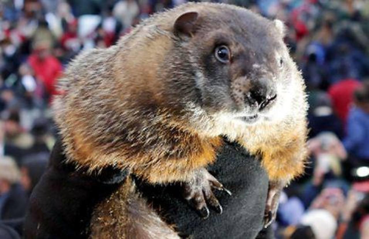 Policía busca a la marmota Phil por mal pronóstico de invierno