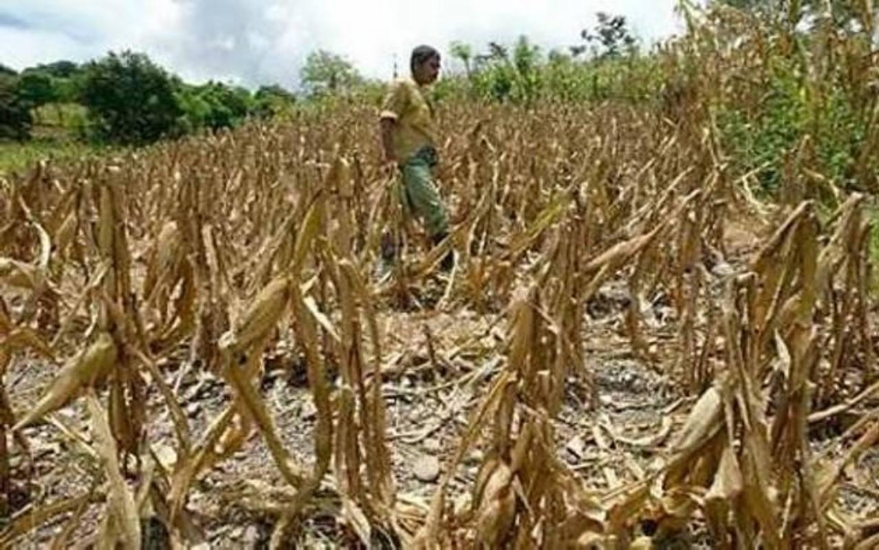 165 municipios se vieron afectados por la sequía.