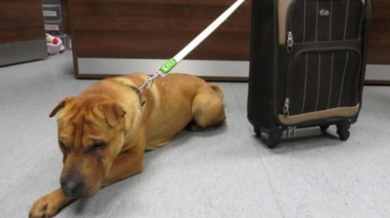 Abandonan a perro con una maleta en estación de tren en Escocia