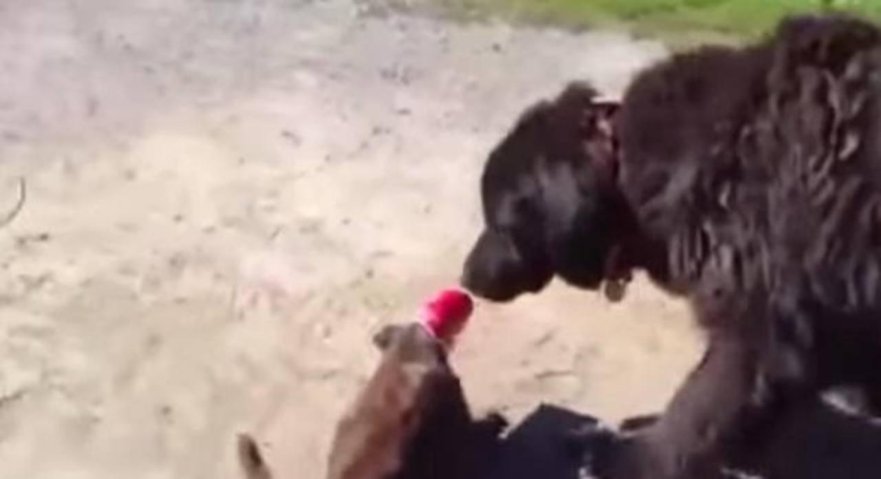 VIDEO: Perro salva de cruel broma a un gato