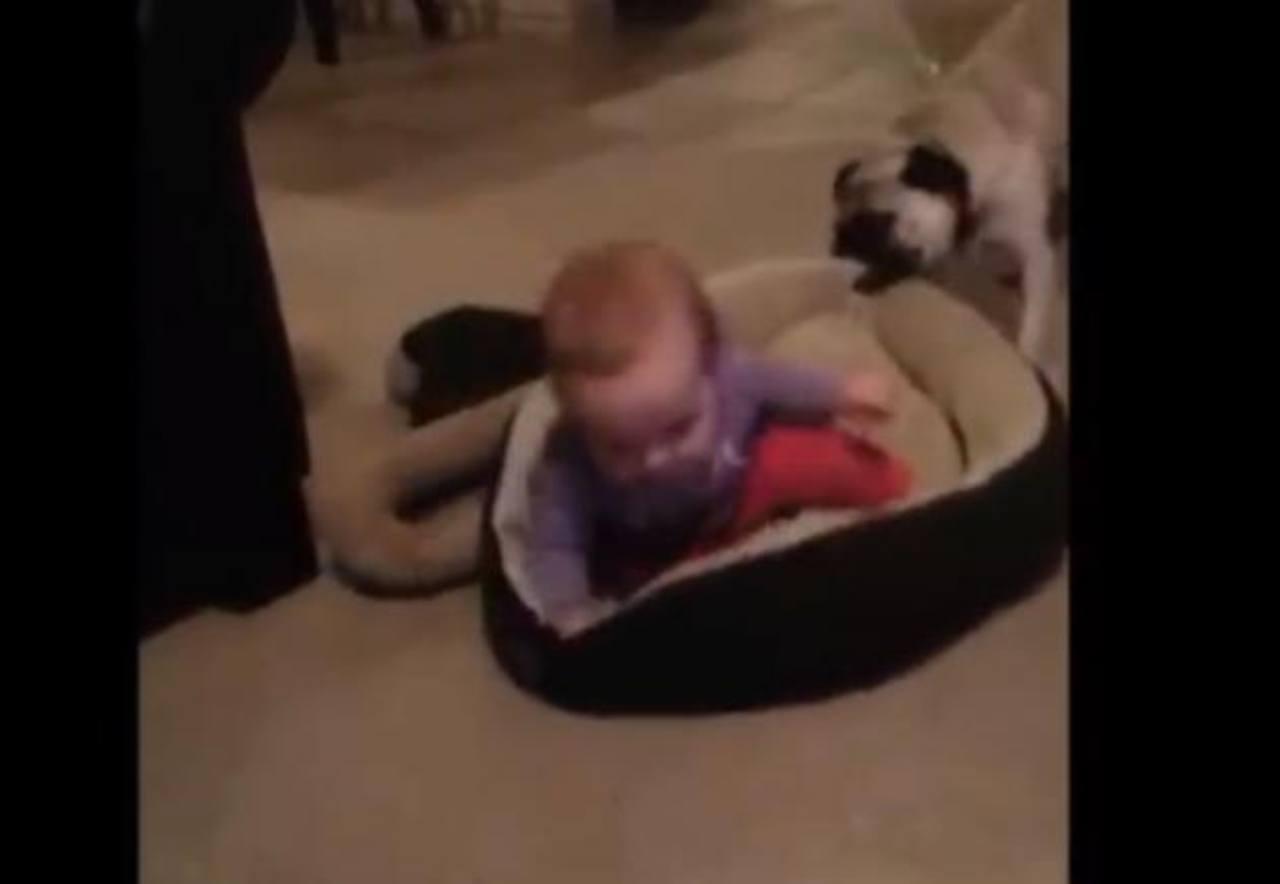 VIDEO: Perro lucha por recuperar su cama ocupada por un bebé