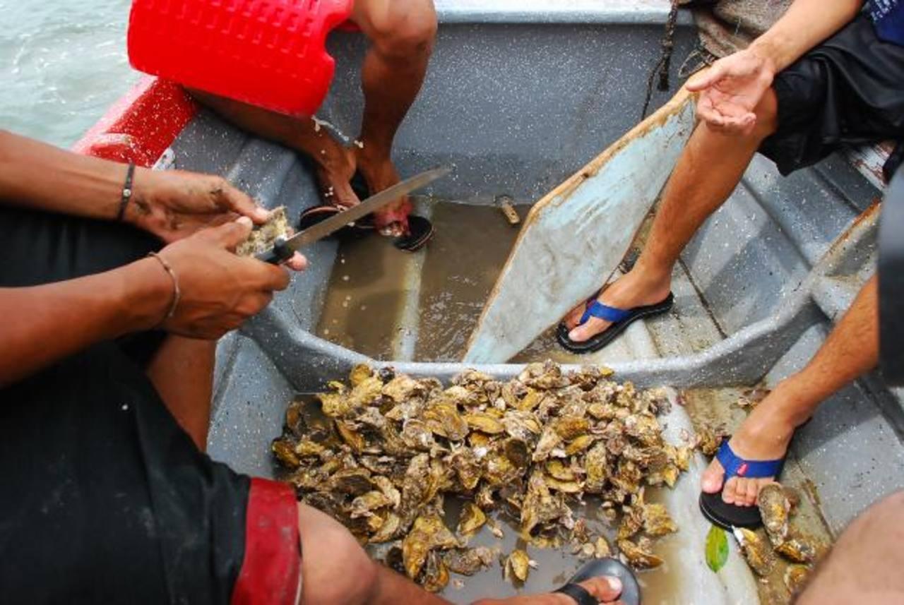 Los recolectores de ostras aseguran que con la construcción del centro de acopio, sus productos no serán tan perecederos y eso mejorará su productividad. foto edh / Insy Mendoza