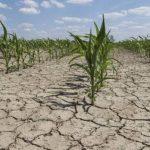 Adaptación al cambio climático requiere $500 millones