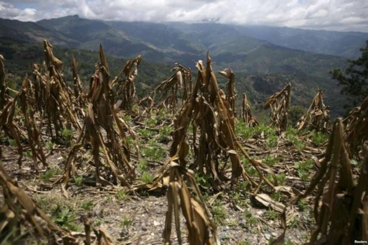 La preocupación de los agricultores es que no podrán recuperar la cosecha perdida, generando así hambruna.