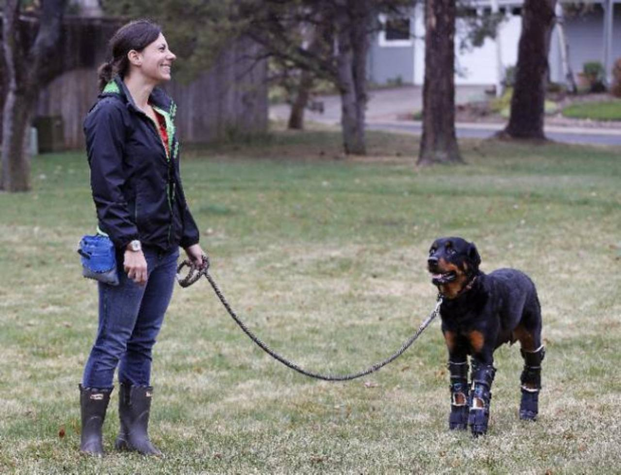 Perro en Colorado recibe prótesis en las cuatro patas
