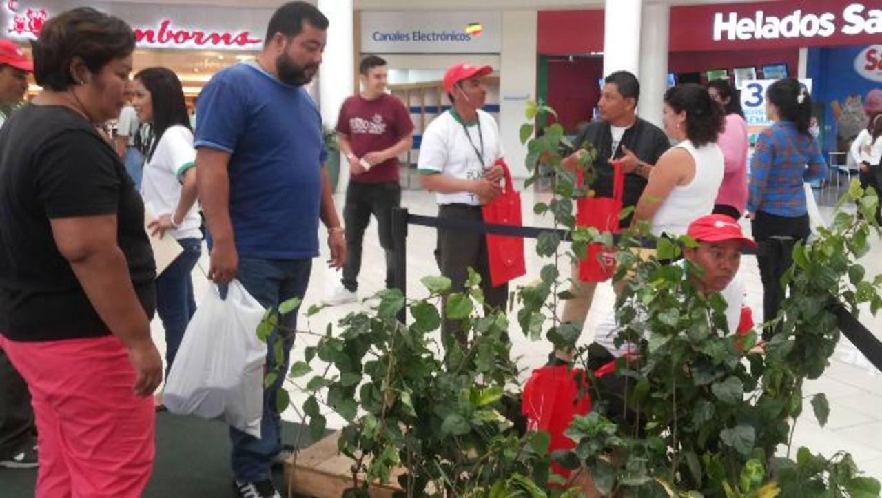 Los clientes de los centros comerciales pudieron llevar un árbol a casa por sus compras. foto edh / violeta Rivas