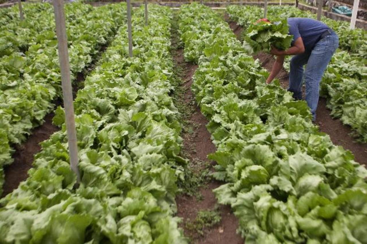 La agronomía es de los sectores que más contribuiría.