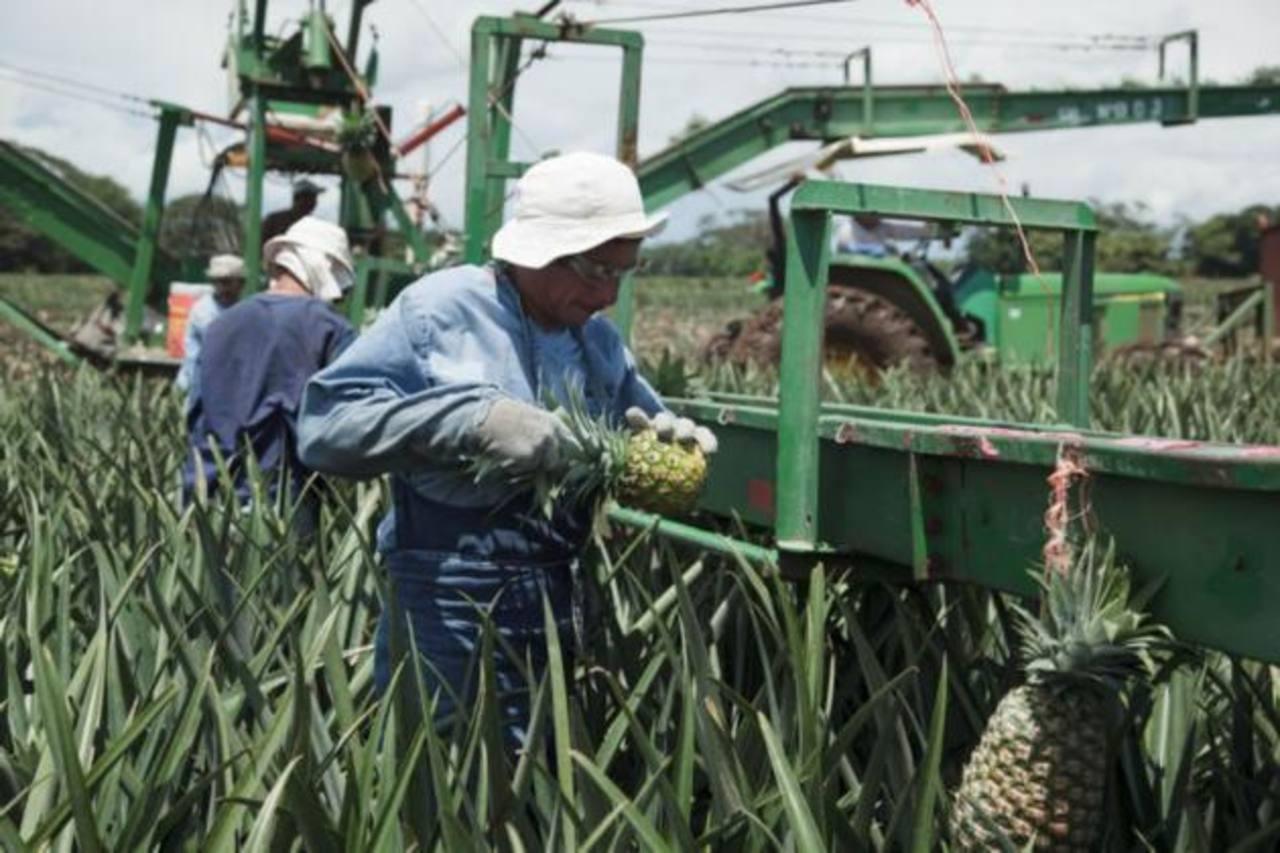 Las expectativas no son iguales para el sector agrícola.