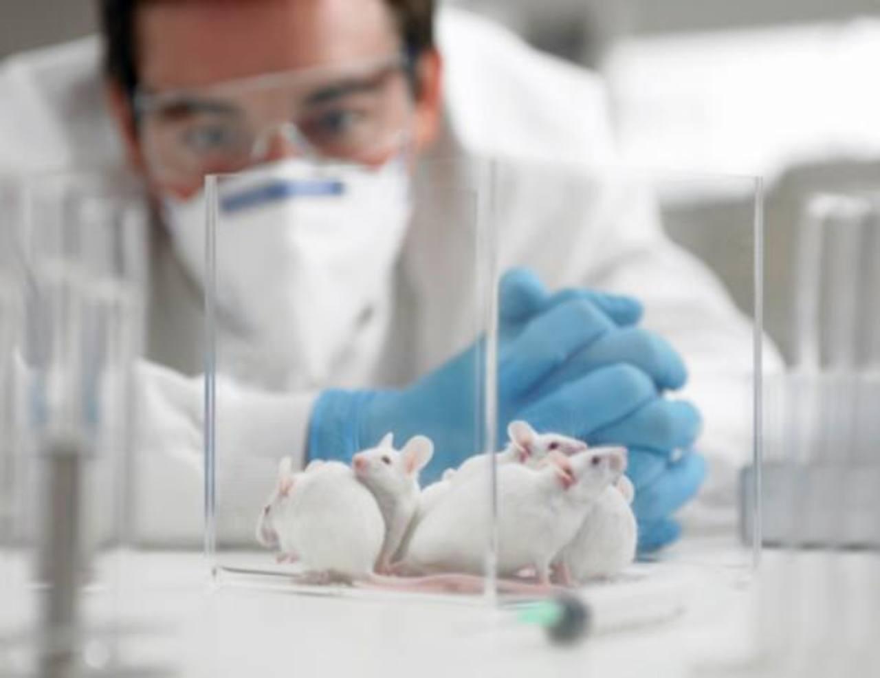 Los resultados obtenidos de la investigación en ratones son alentadores, según expertos. Foto EDH/ Archivo