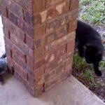 VIDEO: Tortuga intenta atrapar a un gato