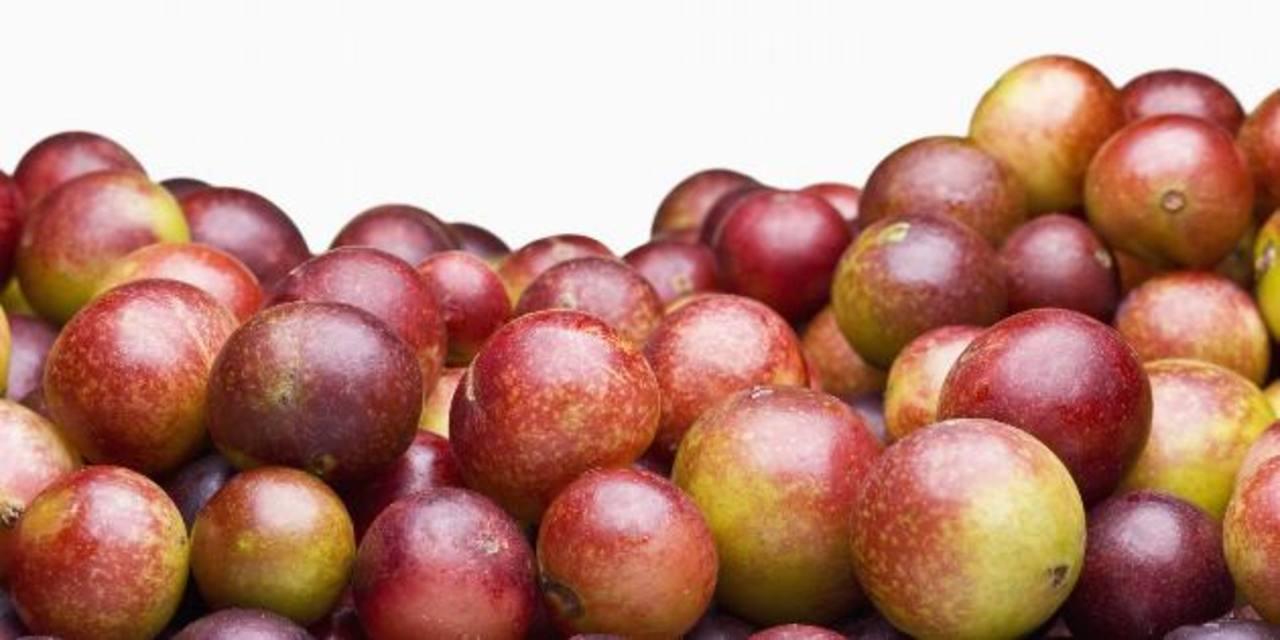 El fruto del arbusto nativo de la Amazonía (Colombia, Perú y Brasil) es uno de los más ricos en vitamina C. foto edh