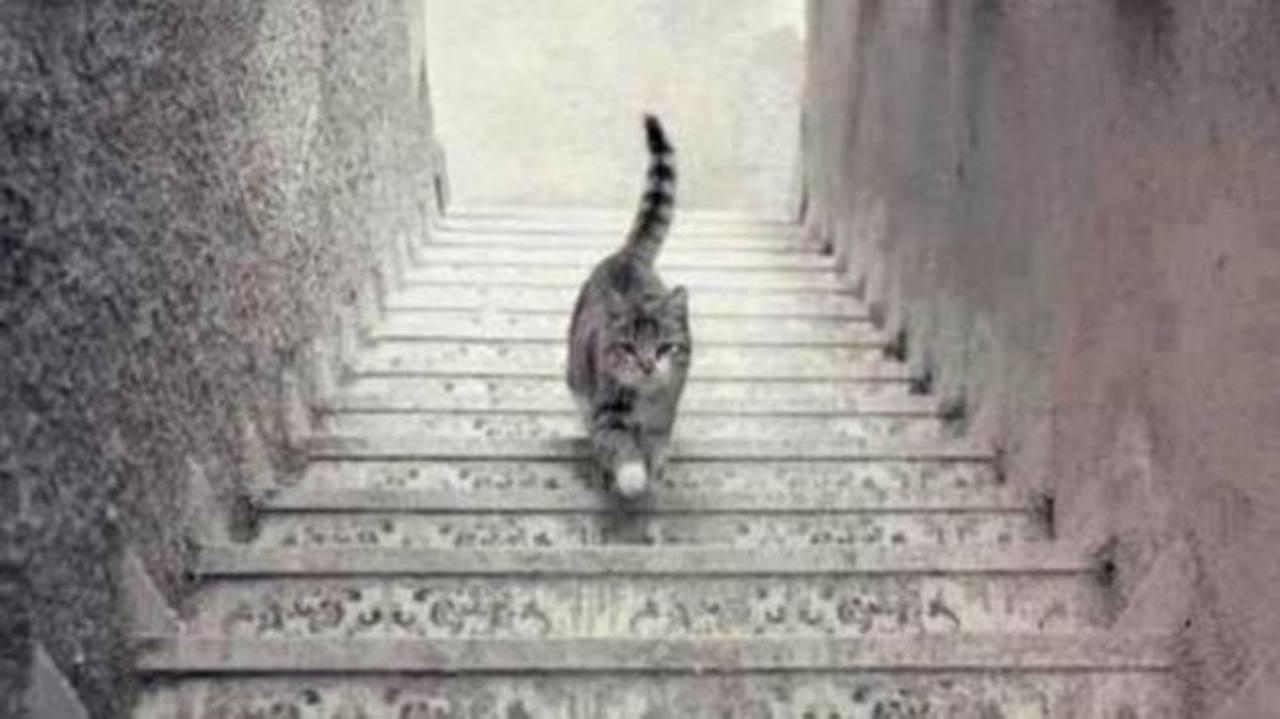 El nuevo debate en redes, ¿el gato sube o baja las escaleras?