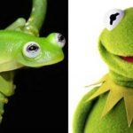 """Descubren una especie de rana parecida a la """"Rana René"""" en Costa Rica"""
