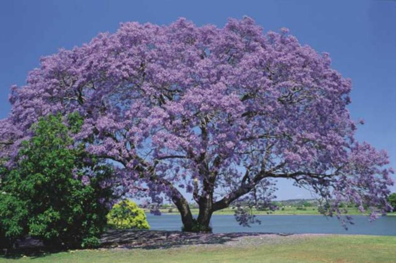 árboles Autóctonos Que Dan Belleza E Ingresos Elsalvadorcom