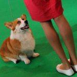 Estudian interrelación afectiva entre amos y perros