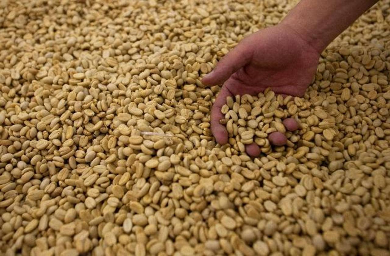 Una de las cotizaciones más bajas en el precio del café fue en noviembre 2013, cuando llegó a $101.60 el quintal. Foto EDH/ Archivo