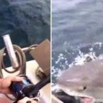 Tiburón sorprende y roba pesca a hombre en Nueva Zelanda