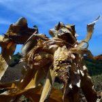 Centroamérica en alerta ante amenaza de sequía