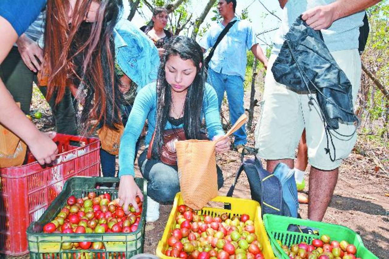Afluencia masiva en Festival del jocote barón rojo
