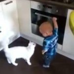 VIDEO: Gato impide que niño se acerque al horno para evitar que se queme