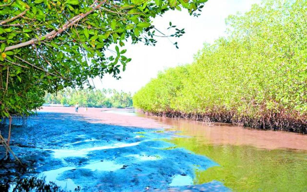 Azolvamiento afecta estero de Barra de Santiago