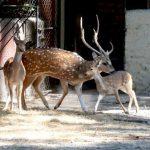 Crías de venado se encuentran en prefecto estado, según autoridades del Parque. /