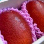 Venden dos mangos en Japón por el precio récord de $2,490
