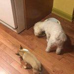 VIDEO: Perro no puede comer solo
