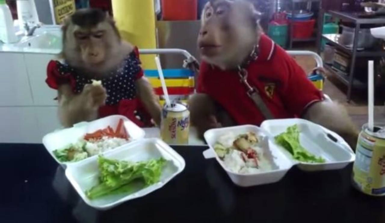 VIDEO: Pareja de monos comiendo en la mesa cautiva al mundo