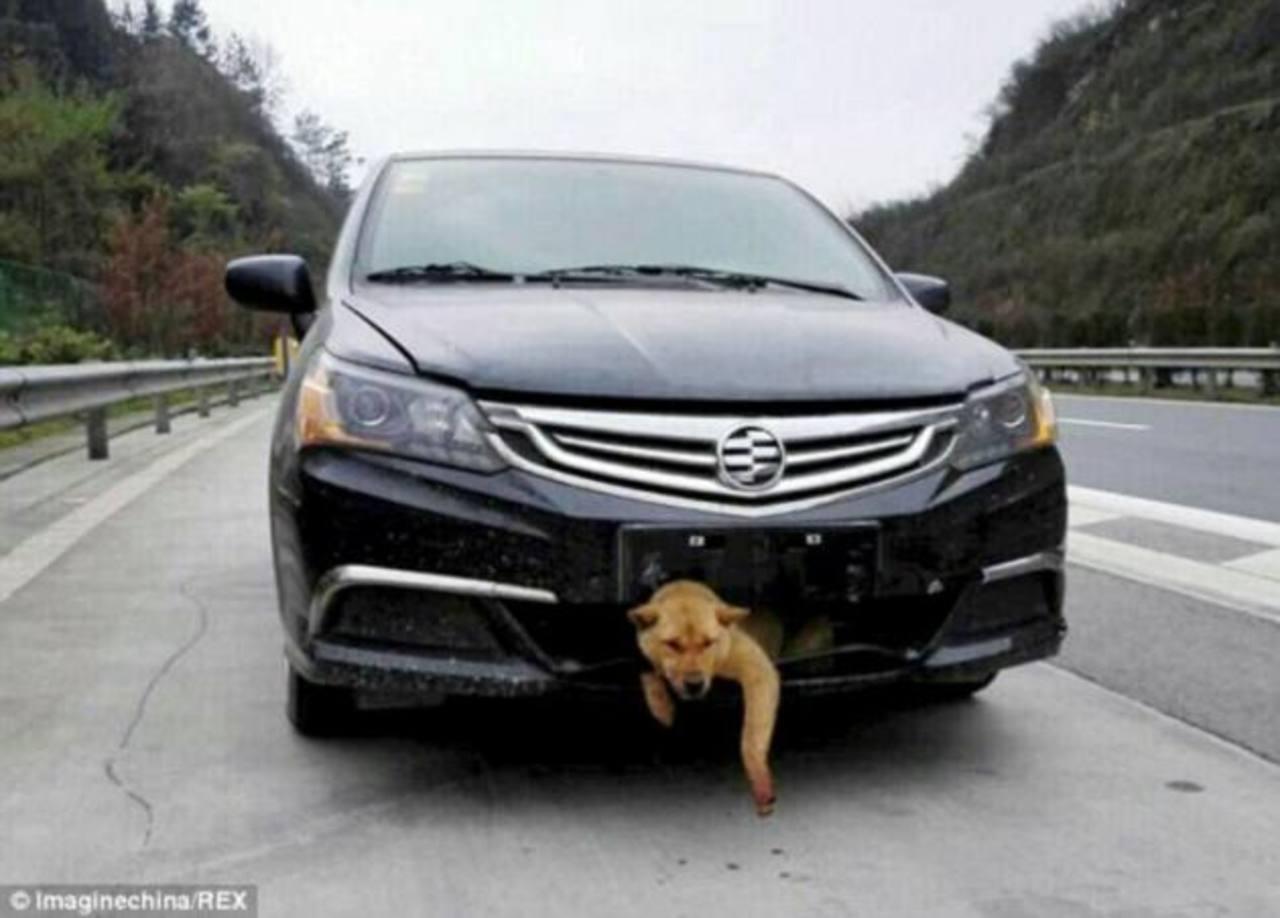 Carro golpea a perro y queda atascado en parte delantera