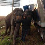 ¿Se imagina a unos elefantes ayudándolo a enderezar su carro?