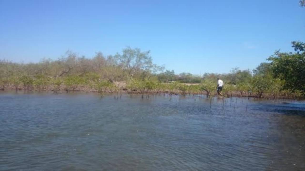 La deforestación con fines comerciales y domésticos ha puesto en peligro los recursos de la zona. Foto EDH / Insy Mendoza