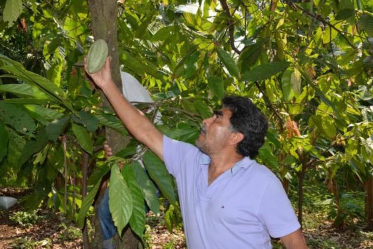 Algunos agricultores del país, de la mano de otros cooperantes, ya están cosechando este fruto.