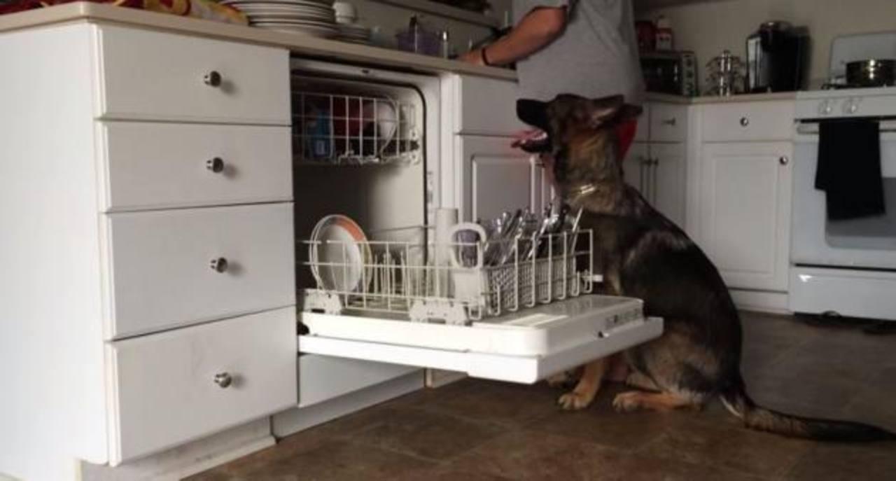 VIDEO: Perro ayuda a su ama a lavar trastes