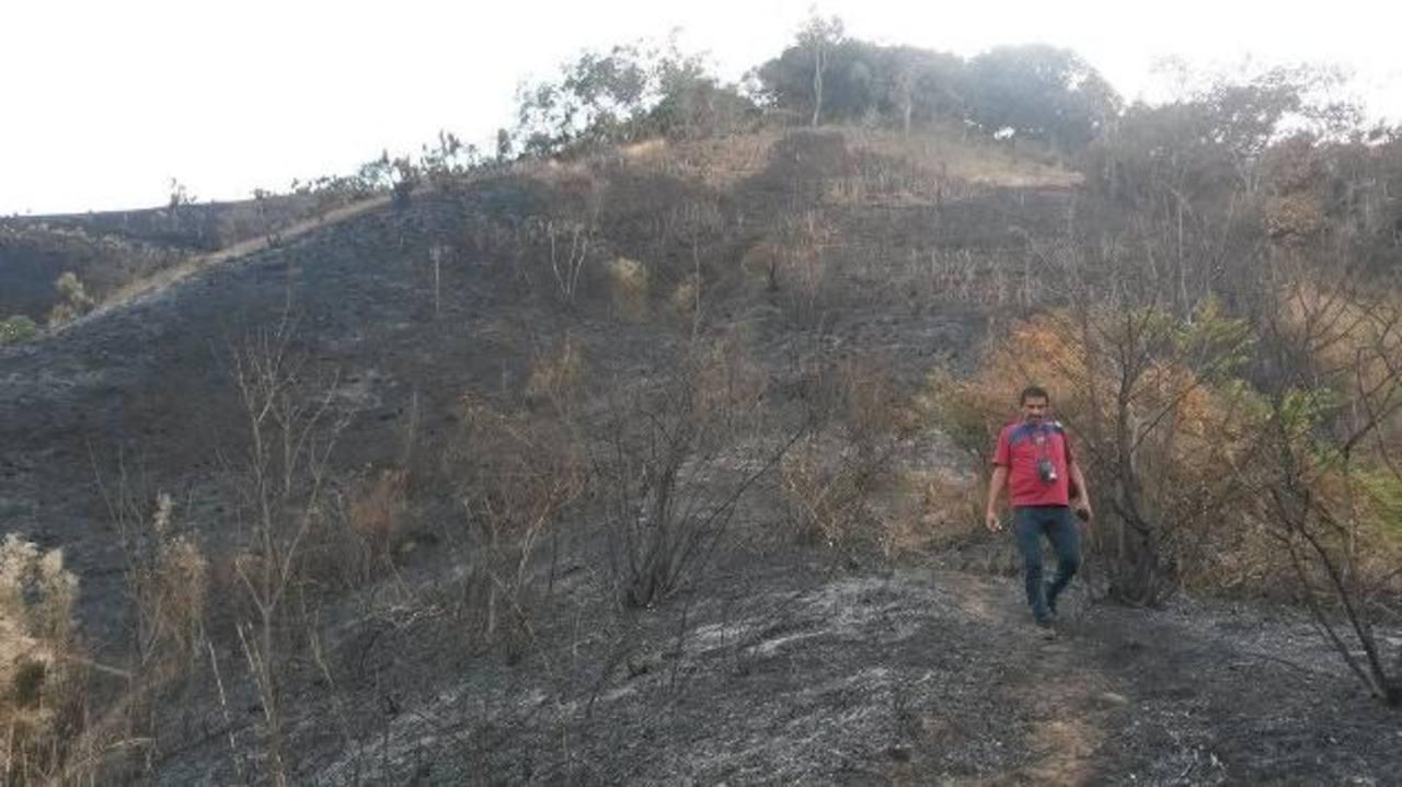 Los daños al medio ambiente son incalculables, diversas especies de animales murieron durante el incendio. foto edh / cortesia