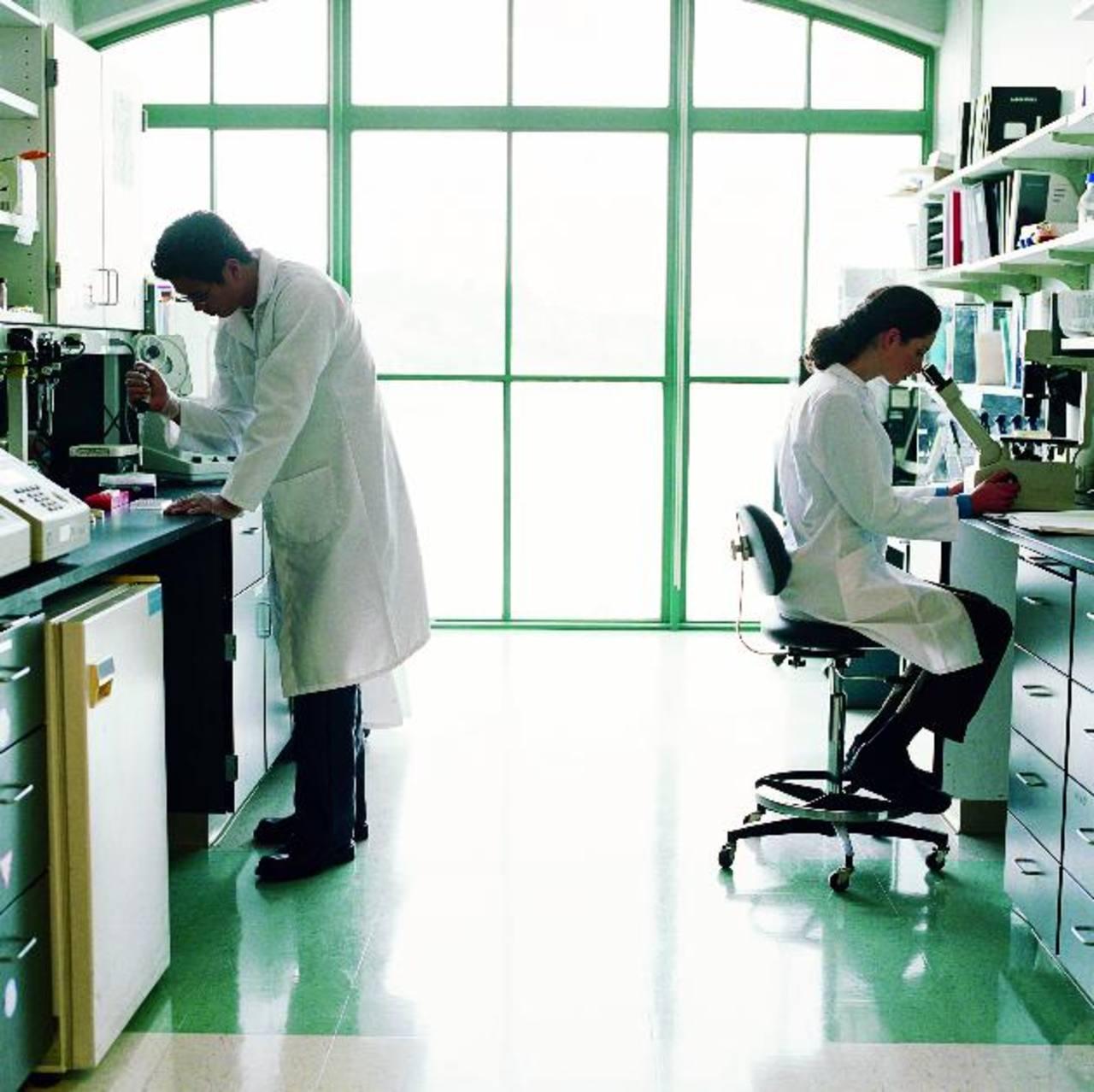 Los científicos identificaron aquellas células que generarán todos los componentes celulares del páncreas. foto edh