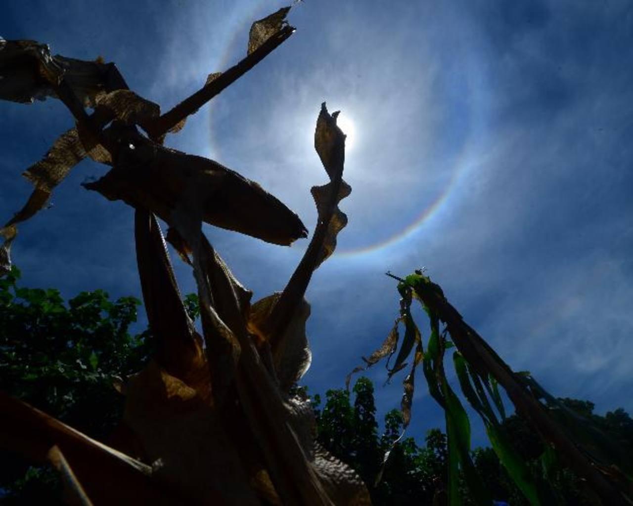 La ceniza del volcán Chaparrastique también contribuyó al recalentamiento del suelo y daño en los cultivos. foto edh / Archivo