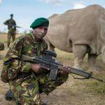 El último rinoceronte blanco del mundo vive custodiado las 24 horas del día