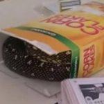 Video: Encuentra serpiente en caja de cereal