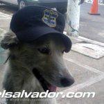 Perro salva a policías de ataque de pandillas en La Paz