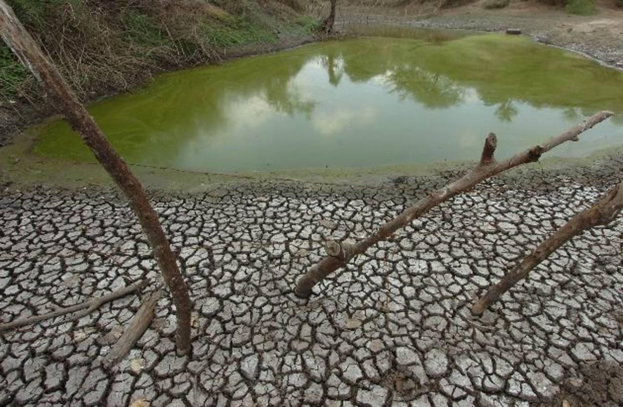 El calentamiento global afecta todos los ciclos de vida en el planeta.