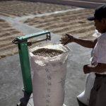 Las cifras provisionales del Consejo Salvadoreño del Café indican que la cosecha 2014-2015 podría cerrar en más de 900 mil quintales. foto EDH / Archivo.