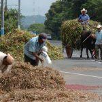 La agricultura genera miles de empleos para personas con pocos recursos económicos. FOTO EDH /ARCHIVO