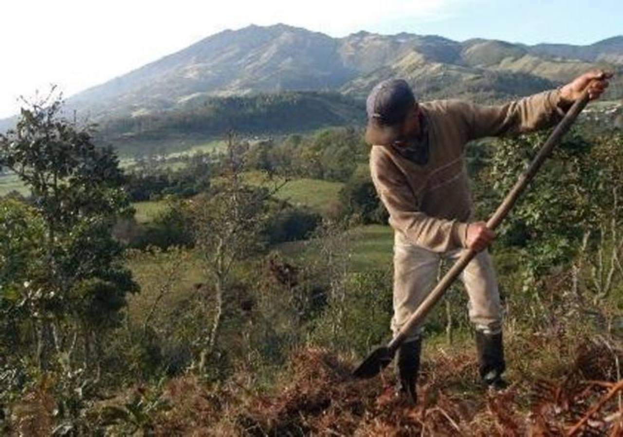 BID lanza plataforma financiera para agricultura de Latinoamérica