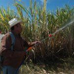 La apuesta es mejorar las prácticas agrícolas y uso de agroquímicos. Foto EDH/